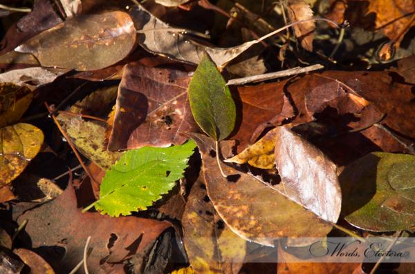 Leaves in Pile