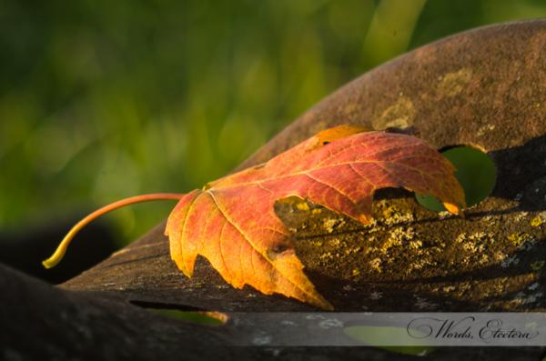 Leaf on Seat