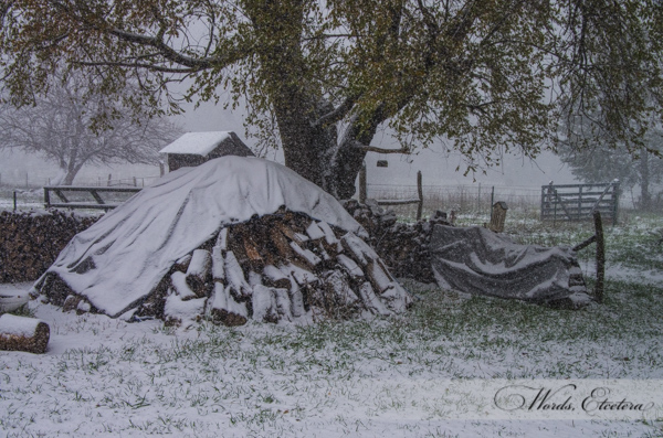 Woodpile in Snow